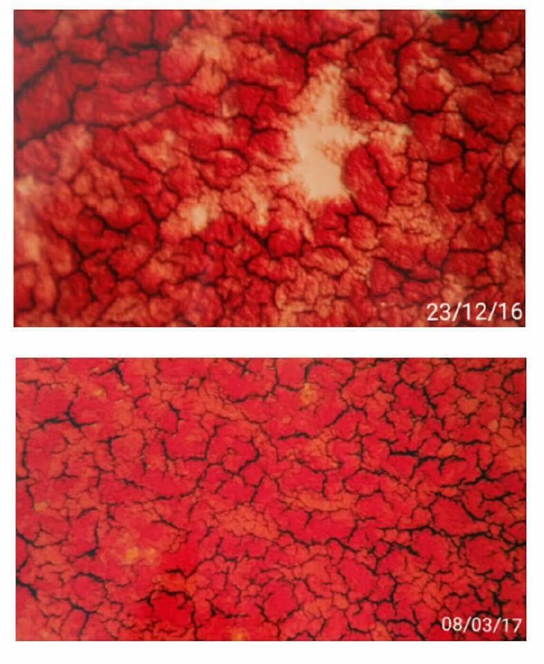 comparativa-sangre.jpg